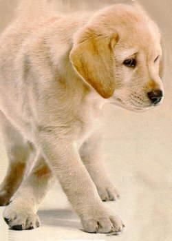 Obrazek pes.jpg